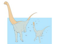 Swimming Sauropods